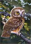 Toland Flag, Saw-whet Owl - Garden Flag